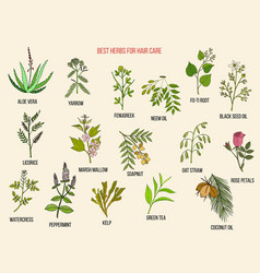 Best medicinal herbs for hair care hand vector