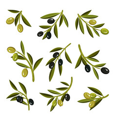 Flat set of small sprigs with leaves green vector