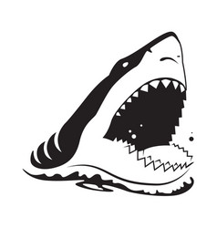 Graphic shark on white background vector