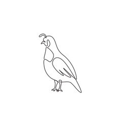 one single line drawing adorable california vector image