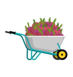 wheelbarrow and beet vegetables in garden trolley vector image