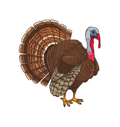 Bird turkey symbol thanksgiving day vector