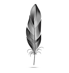 Black and white feathers on a white background vector