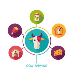 cow farming icon and agriculture infographics vector image