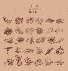 natural spices and herbs collection vector image