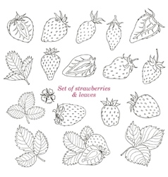 Set of strawberries and leaves vector image