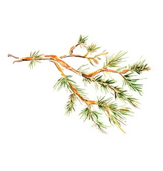 watercolor painting - pine branch vector image