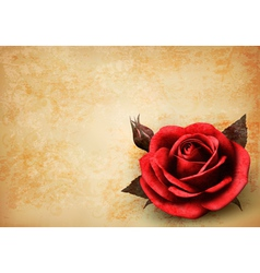 Retro background with beautiful red rose with buds vector image