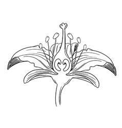 Tiger lily flower outline vector image vector image