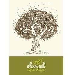 Drawn olive tree label oil vector image