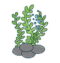 Sea weed isolated icon vector