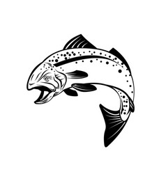 speckled trout spotted seatrout or cynoscion vector image