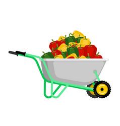 wheelbarrow and pepper vegetables in garden vector image