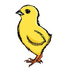 little cute chicken vector image vector image