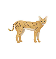 flat design of beautiful serval side view vector image