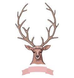 sketch beautiful deer with ribbon vector image