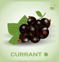blackcurrant ripe berries with green leaves vector image vector image