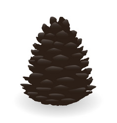 cartoon fir cone isolated on white background vector image