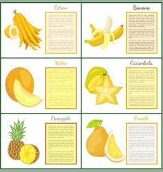 Citron banana melon and kumquat posters vector