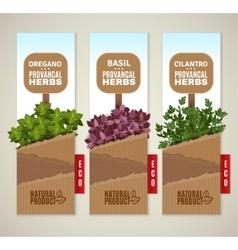Herbs de Provence banners vector
