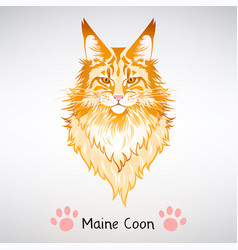 portrait red cat maine coon vector image