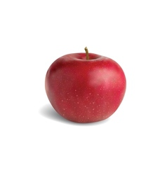 Realistic red apple vector image