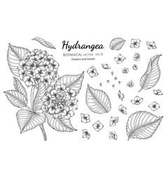 Set hydrangea flower and leaf hand drawn vector
