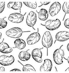 Spinach leaves hand drawn seamless pattern vector image