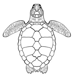 sea turtle hand drawn vector image