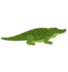 crocodile isolated cartoon vector image