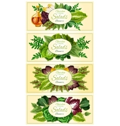 Fresh lettuce and green salad leaves banner set vector