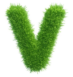 small grass letter v on white background vector image