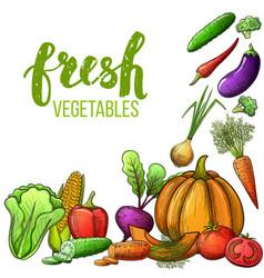 vegetables colorful sketch vector image