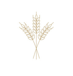 Wheat or barley icon outline for logo vector