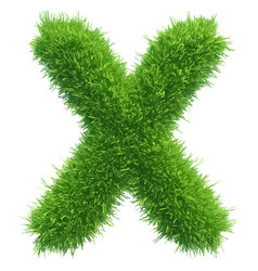 small grass letter x on white background vector image