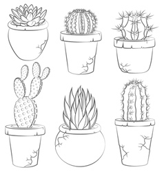 Collection of cactuses in flower pot vector image