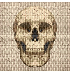 cracked canvas skull vector image vector image