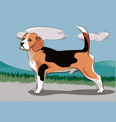 Beagle male dog vector