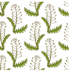 colored shepherds purse pattern in hand drawn vector image