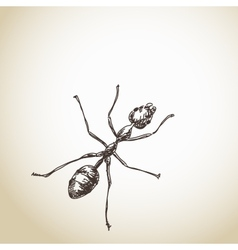 Hand drawn ant vector image
