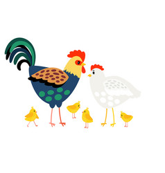 rooster family hen mother cock father and vector image