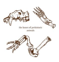 Sketchy prehistorical bones animals vector