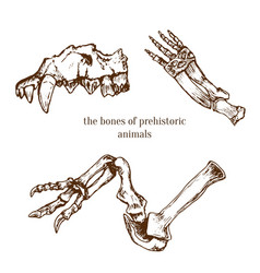 Sketchy prehistorical bones of animals vector