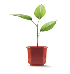 Young plant in plastic pot 3d vector