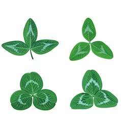clover set vector image