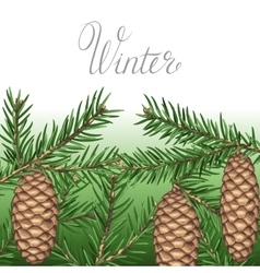 Background with fir branches and cones Detailed vector