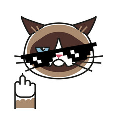 Grumpy cat making gesture with middle finger vector