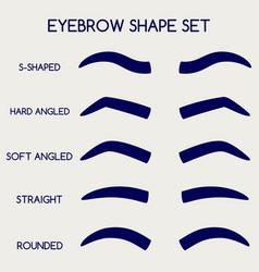 female eyebrows shape set vector image vector image
