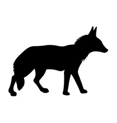 coyote vector image