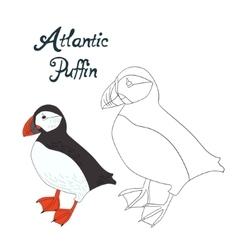 Educational game coloring book puffin bird vector